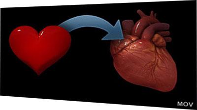 timeline-heart-img